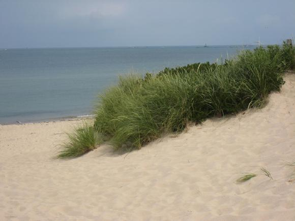 Nantucket beach and dune grass by Sarah Laurence